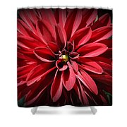 Dahlia Radiant In Red Shower Curtain