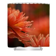 Dahlia Rainshower Shower Curtain