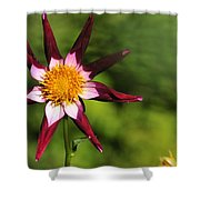 Dahlia Red White And Green Shower Curtain