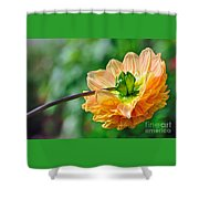 Dahlia Resting Shower Curtain