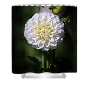 Dahlia White Flowers II Shower Curtain