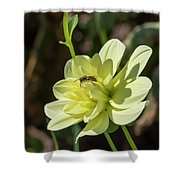 Dahlia With Wasp Shower Curtain