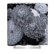 Dahlias Multi Bw Shower Curtain