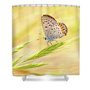 Dainty Butterfly  Shower Curtain