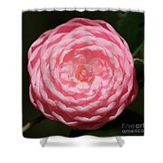 Dainty Pink Camellia Shower Curtain