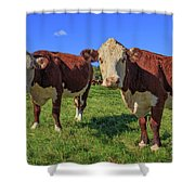 Cattle Andover New Hampshire Shower Curtain