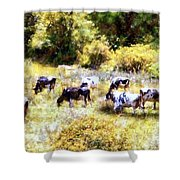 Dairy Cows In A Summer Pasture Shower Curtain by Janine Riley