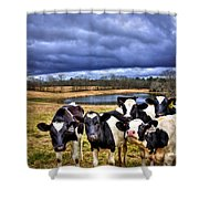 Dairy Heifer Groupies Future Chick-fil-a Starrs Shower Curtain
