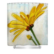 Daises From The Past Shower Curtain