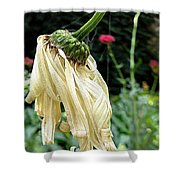 Daisey's End Shower Curtain