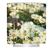 Daisies And A Hand Plow Shower Curtain