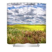 Daisies And Canola Shower Curtain