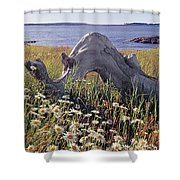 136236-daisies And Driftwood  Shower Curtain
