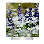 Daisies And Lupine Shower Curtain
