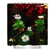 Daisies At The Boathouse Shower Curtain