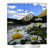 Daisies By Mcdonald Creek With Mt Cannon, Glacier Park Shower Curtain