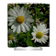 Daisies By The Number Shower Curtain