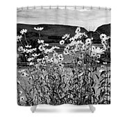 Daisies By The Roadside At Loch Linnhe B W Shower Curtain