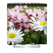 Daisies Flowers Art Prints Spring Flowers Artwork Garden Nature Art Shower Curtain