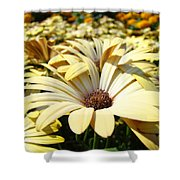Daisies Flowers Landscape Art Prints Daisy Floral Baslee Troutman Shower Curtain