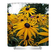 Daisies From Niagara Shower Curtain