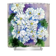 Daisies In Repose Intense Shower Curtain