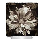Daisies In Sepia Shower Curtain