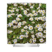Daisies In Spring Shower Curtain