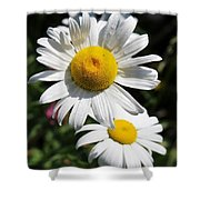 Daisies In The Sunshine Shower Curtain