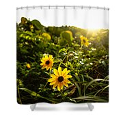 Daisies Tangled Sunrise Delray Beach Florida Shower Curtain