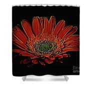 Daisy 105 Shower Curtain