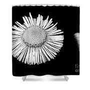 Daisy 4 Shower Curtain