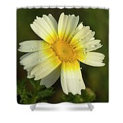 Daisy #5 Shower Curtain