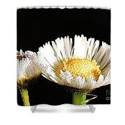 Daisy 6 Shower Curtain