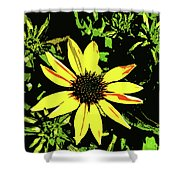 Daisy Bell Shower Curtain