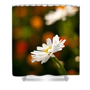 Daisy Bokeh Shower Curtain