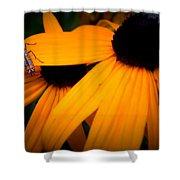 Daisy Bug Shower Curtain
