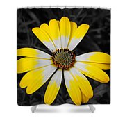 Daisy Crown Shower Curtain