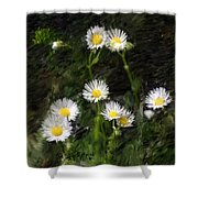 Daisy Day Fantasy Shower Curtain