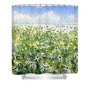 Daisy Field Shower Curtain