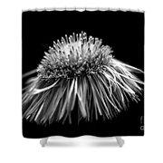 Daisy Flea Bane 0619c Shower Curtain