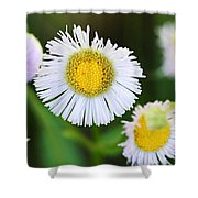 Daisy Fleabane Shower Curtain