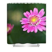 Daisy Flower Shower Curtain by Pradeep Raja Prints