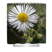 Daisy In White Shower Curtain