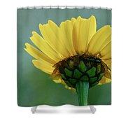 Daisy Shower Curtain
