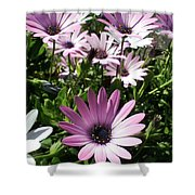 Daisy Patch Shower Curtain