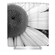 Daisy Study 1 Shower Curtain