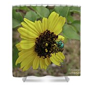 Daisy With Blue Bee Shower Curtain