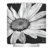 Daisy With Raindrops In Black And White Shower Curtain