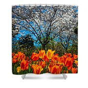 Dallas Arboretum Tulips And Cherries Shower Curtain